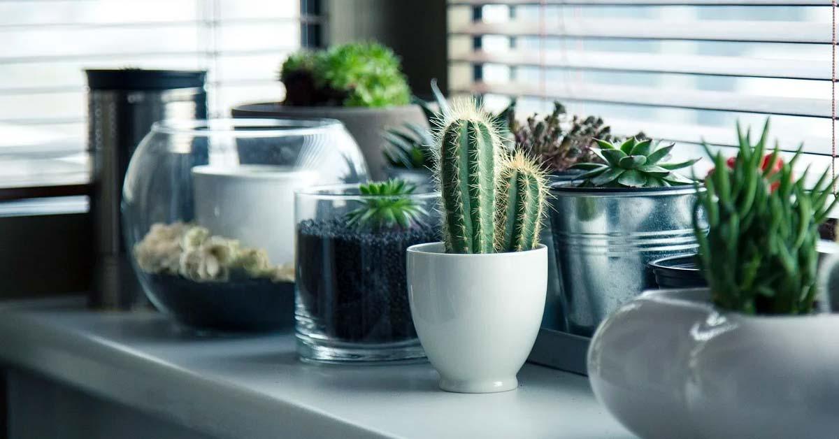 Cuidar de nuestras plantas en casa una forma de sentirse útil - CasasDepasyCuartos.com