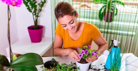 Las plantas en casa beneficios de tenerlas cerca - CasasDepasyCuartos.com